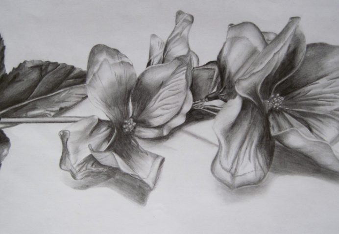 Flowers in pencil